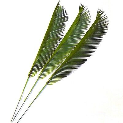 Artificial Cycas Palm Leaves - Easter - Palm Sunday - Choose Pack Size From List
