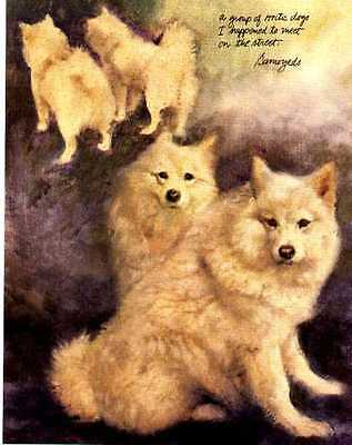 Samoyed - Vintage Dog Art Print - Poortvliet