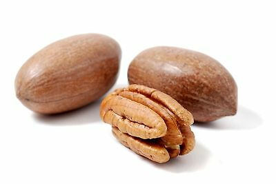 5 Fresh Seeds Pecan Delmas tree Nut Natural From Israel Carya illinoinensis פקאן