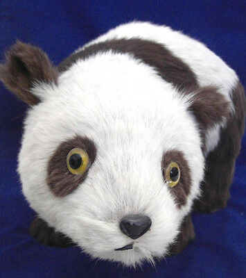 Vintage Cow's Hide Panda Bear with Glass Eyes