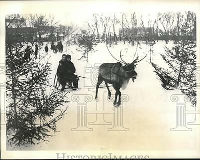 1935 Press Photo Moscow zoo reindeer pull a sled in Russia