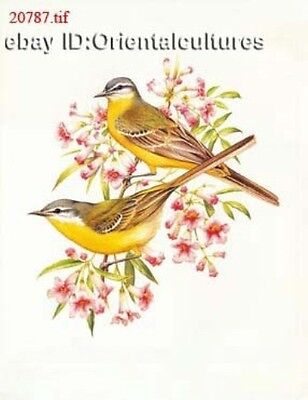 Chinese 100% Real Natural Silk thread,Hand Embroidery Kits:flower&birds 12inches