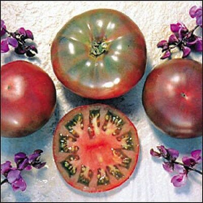 Organic Vegetable Tomato Purple Cherokee 60 Finest Seeds