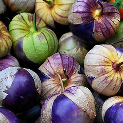 Organic Vegetable Tomatillo Purple Physalis Ixocarpa 60 Seeds