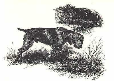 GERMAN WIREHAIRED POINTER - 1964 Dog Art Print - MATTED