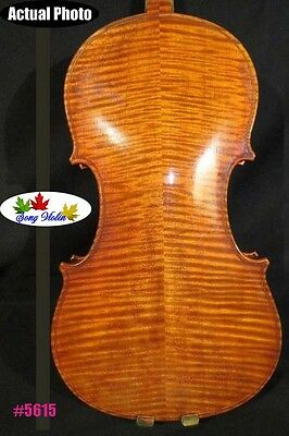 Beautiful Copy old finishes Strad style Maestro violin 4/4,powerful sound #5615