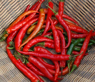 Organic Vegetable  Hot Chilli Pepper Ring Of Fire  80 Seeds