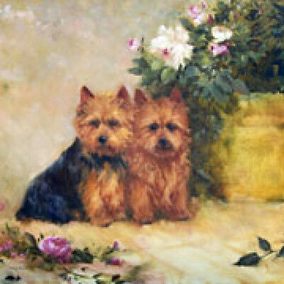 Boxed Note Cards (MB241) - Norwich Terriers