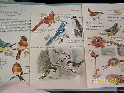 """CHINA PAINTING STUDY """"SMALL TALKS #3"""" NORMA GULICK BIRDS OF FIELD & FOREST 4 PAG"""