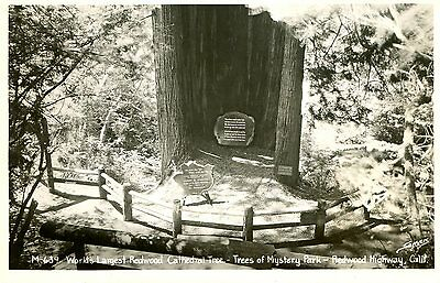 Postcard RPPC TREES OF MYSTERY PARK Redwood Hwy CA LARGEST CATHEDRAL TREE hf914