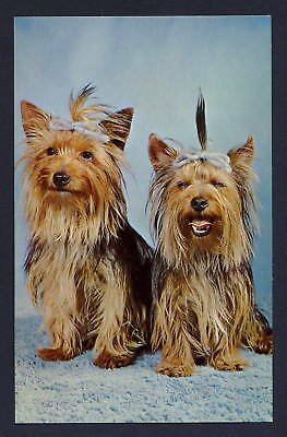 a pair of dogs with bows puppies - dog postcard