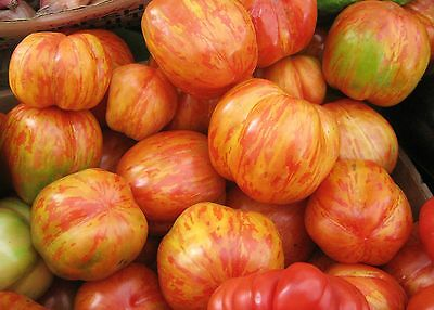Vegetable Tomato Tigerella 100 Finest Seeds ** Uk Free P&P **