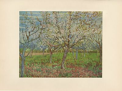 """1952 full Color Art Plate """" The Orchard """" by Van Gogh Lithograph Litho"""