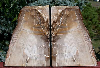 SiS: MUST SEE Petrified Wood SEQUOIA Bookends - Oregon Originals!