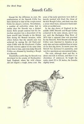 """The Smooth Collie - Vintage Dog Art Print - Matted """"G"""""""