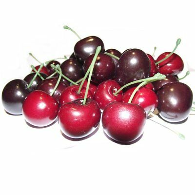 Box of 35 Artificial Cherries - Decorative Plastic Fruit - Red Cherry
