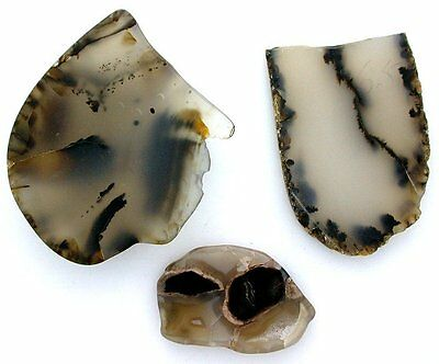 94.7 Gram THREE Montana Dendridic Agate Slab Gem Cab Cabochon Rough MAS1