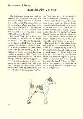 "The Smooth Fox Terrier - Vintage Dog Art Print - Matted ""G"""