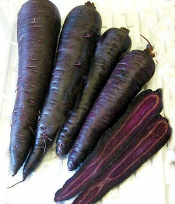 Vegetable  Carrot  Purple Sun F1  100 Seeds  ** Free Uk P&p**
