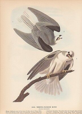 "1942 Vintage AUDUBON BIRDS #81 /""OSPREY/"" FISH in TALONS Color Art Plate Litho"
