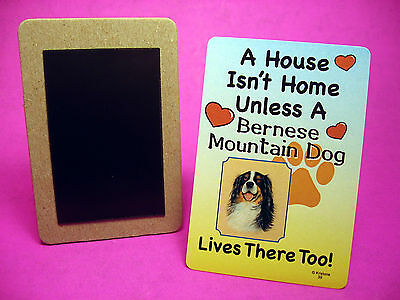 """Bernese Mountain Dog"" A House Isn't Home - Dog Fridge Magnet - Sku# 39"