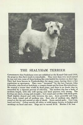 * Sealyham Terrier - 1931 Vintage Dog Print - MATTED
