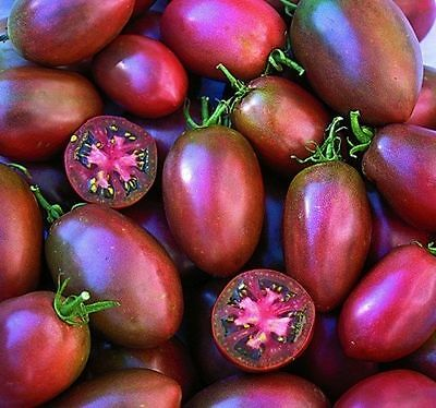 Vegetable Tomato Ukranian Purple 750 Finest Seeds Bulk