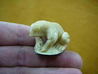 (tb-frog-4) Frog Toad Tagua NUT palm figurine Bali detailed carving I love frogs