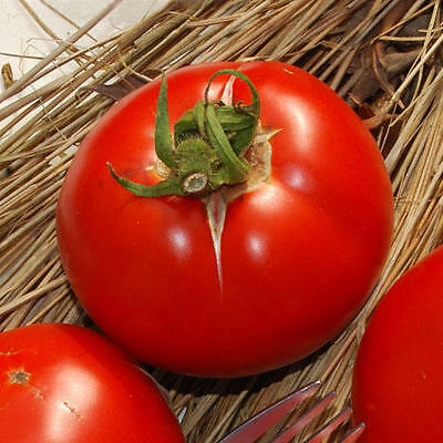 Vegetable Tomato Saint Pierre 300 Finest Italian Seeds