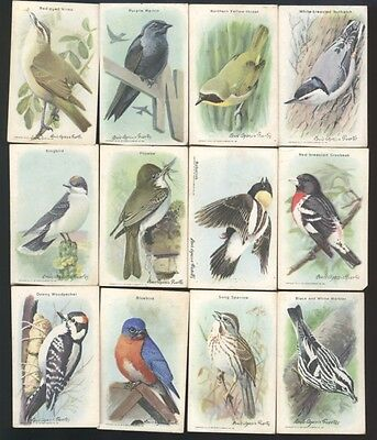 Useful Birds of North America Cards, Arm & Hammer, 17 cards
