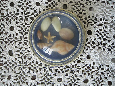 """Glass Paperweight Sea Shell Vintage 3""""x1"""" # 289"""