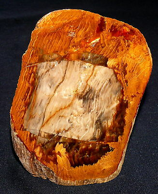 Versteinertes Holz Crab Tree Valley, Oregon, 691,5g 125x88x52mm Ofen Kamin Deko