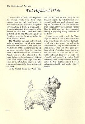 "The West Highland White Terrier - Vintage Dog Art Print - Matted ""G"""