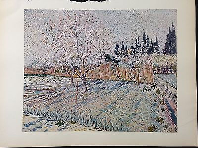 """1950 Vintage Full Color Art Plate """"ORCHARD, SPRINGTIME"""" by VAN GOGH Lithograph"""