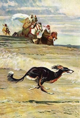 Saluki - Vintage Color Dog Print - MATTED