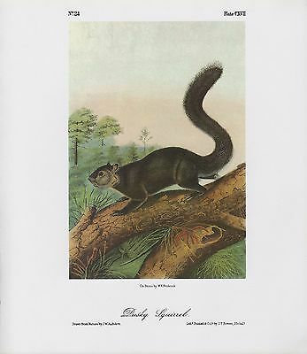 "1989 Vintage /""VIRGINIAN OPOSSUM/"" A LOVELY AUDUBON MAMMAL COLOR Art Lithograph"