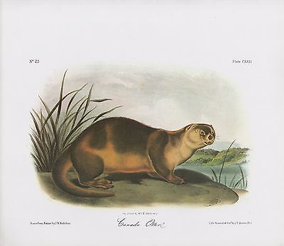 "1989 Vintage /""TEXAN HARE/"" A LOVELY AUDUBON MAMMAL COLOR Art Plate Lithograph"