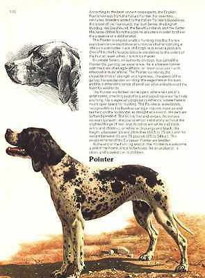 Pointer - Vintage Dog Print - 1976 Cozzaglio