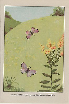 """1917 Vintage BUTTERFLY /""""SILVER BORDERED FRITILLARY/"""" COLOR Art Plate Lithograph"""