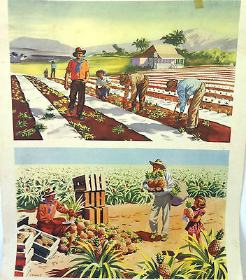 Rare Macmillan School Poster - Cultivating Pineapples in Australia - J Francis