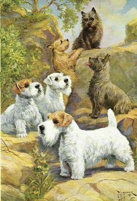 Sealyham & Cairn Terrier - Vintage Color Dog Print - MATTED
