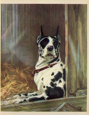 * Great Dane - 1932 Vintage Dog Print - Diana Thorne