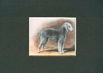 - Bedlington Terrier - Dog Print - Megargee CLEARANCE