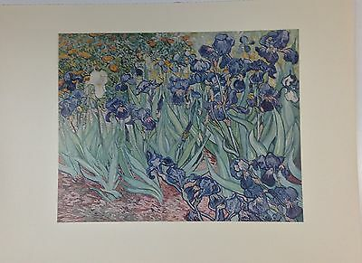 """1957 Vintage Full Color Art Plate """"IRISES"""" by VAN GOGH Lovely Lithograph Litho"""