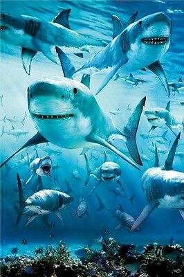 SHARK INFESTATION VERTICAL 24x36 POSTER Great White Sharks Jaws NEW/ROLLED!