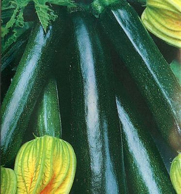 Organic Vegetable  Courgette Black Beauty  10 Seeds  **free Uk P&p**