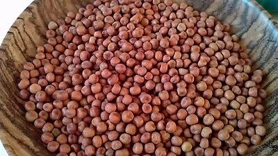 Red Carlin Pea Ancient English 14 C Variety Rare Heavy Cropper 50 Fresh Seeds