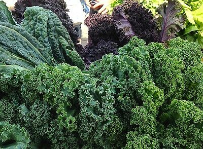 Garden Kale Collection 4 Superb Varieties In One Deal Extend Cropping 200 Seeds