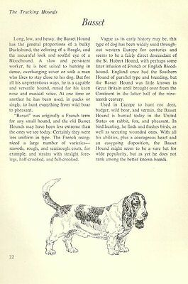 "The Bassett Hound - Vintage Dog Art Print - Matted ""G"""