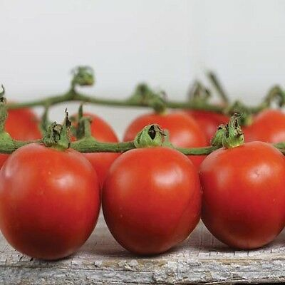 Organic Vegetable Tomato Chadwick Cherry 80 Finest Seeds